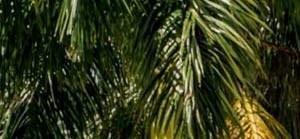 Orlando background 1