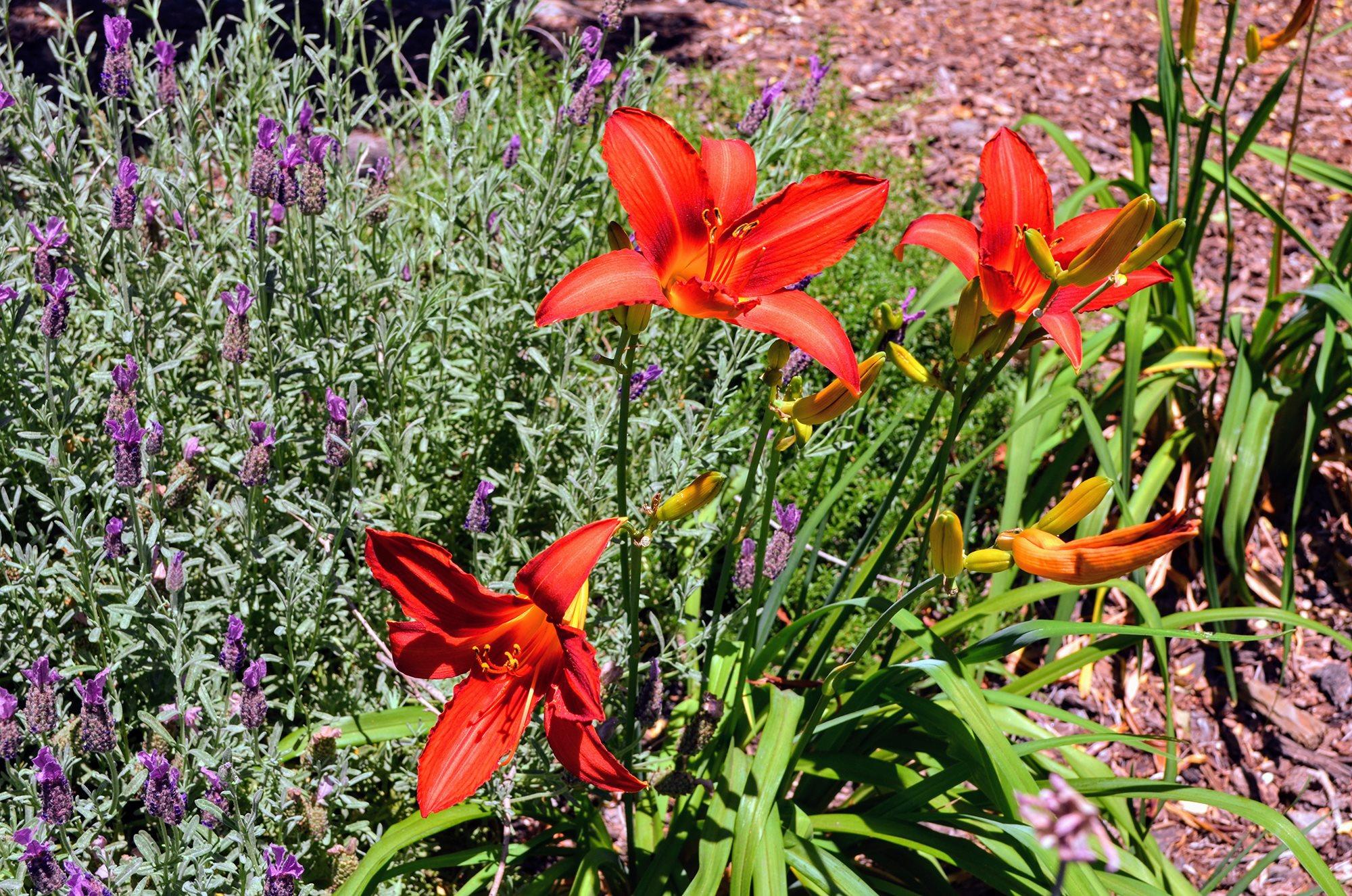 Beautiful Planter Combinations at Bella Vista Apartment Homes, Napa, 94558