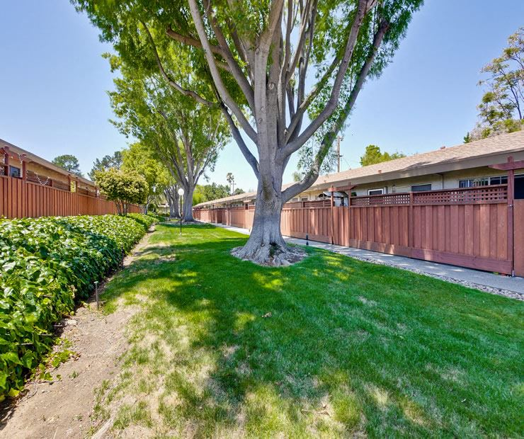 Grass Area l Sunnyvale, Ca l  Cherry Blossom Apartments