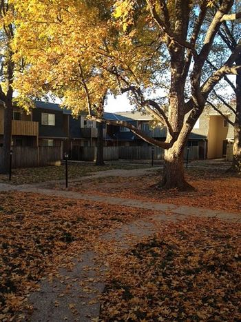 9512 W. 87th St. 1-2 Beds Apartment for Rent Photo Gallery 1