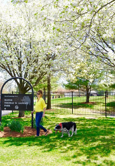 Pet Park at Park87, Cambridge,Massachusetts