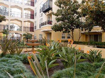 325 Cordova Street 1-2 Beds Apartment for Rent Photo Gallery 1