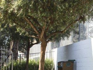 Apartments in Montclair, CA | The Lexington