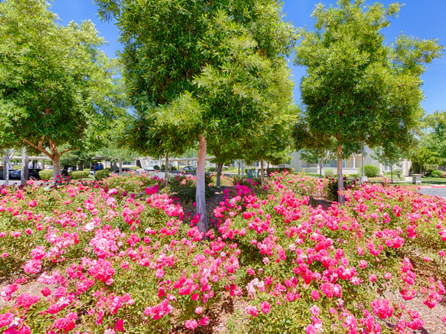 Beautifully Landscaped Grounds With Flowers at Harvest Park Apartments, CA, 95404
