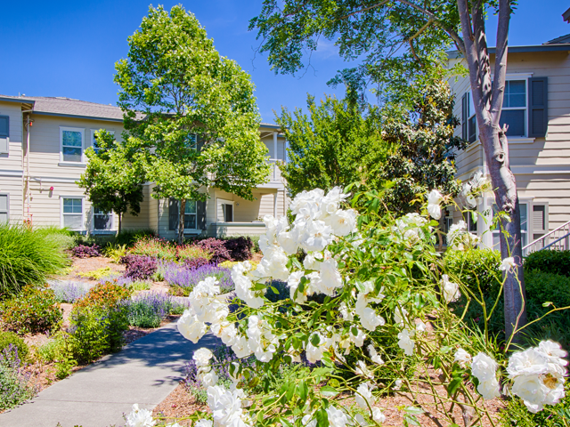 Beautiful Landscaping and Park-like Setting at Harvest Park Apartments, 2327 Summercreek Dr