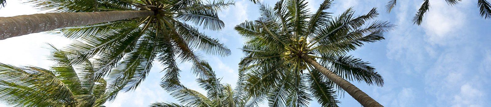 Palm trees-Santa Clara II Apartments Miami, FL