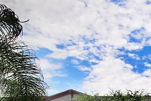 Phoenix photogallery 19