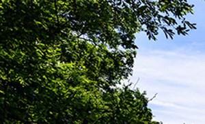 Putnam Green homepagegallery 3