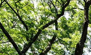 Putnam Green homepagegallery 2