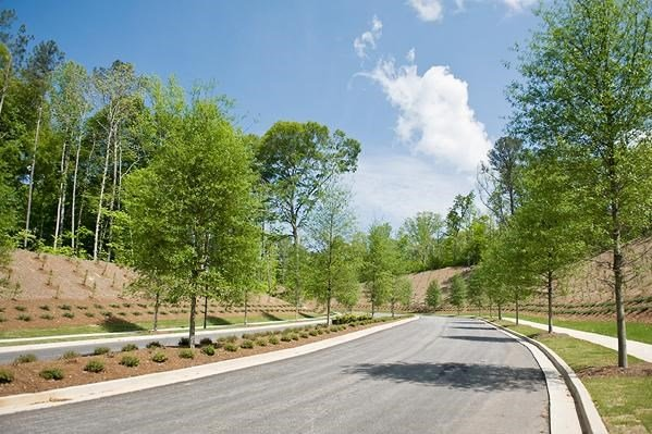 Legacy at Walton Lakes Entry Drive