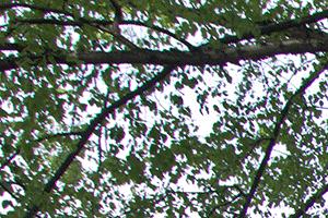 Dogwood Glen background 2