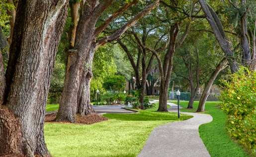 Grand Oaks Apartment Homes Riverview, FL 33578 Lush Landscaping