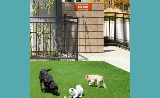 Accent Dog Park
