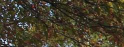 Cardinal Place in Monona Wisconsin 53716