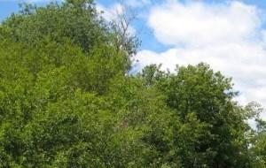 Scenic Landscaping