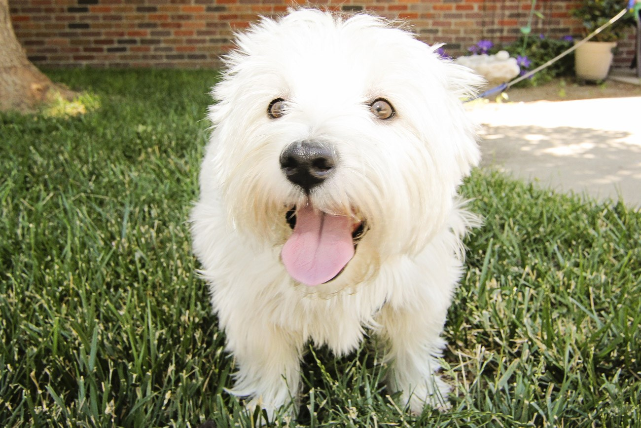 Exteriors-Southwind Villas welcomes small and large dogs and cats