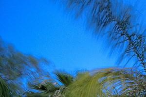 Phoenix photogallery 16