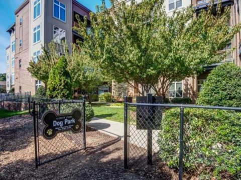 Dog Park at Elizabeth Square Apartments in Charlotte, NC