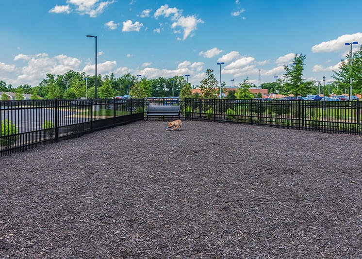 Dog Friendly Community at Abberly at Southpoint Apartment Homes, Virginia