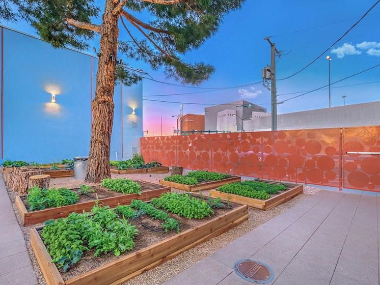 The Neon Apartments Organic Garden