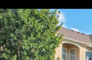 535 Gembler Road 1-3 Beds Apartment for Rent Photo Gallery 1
