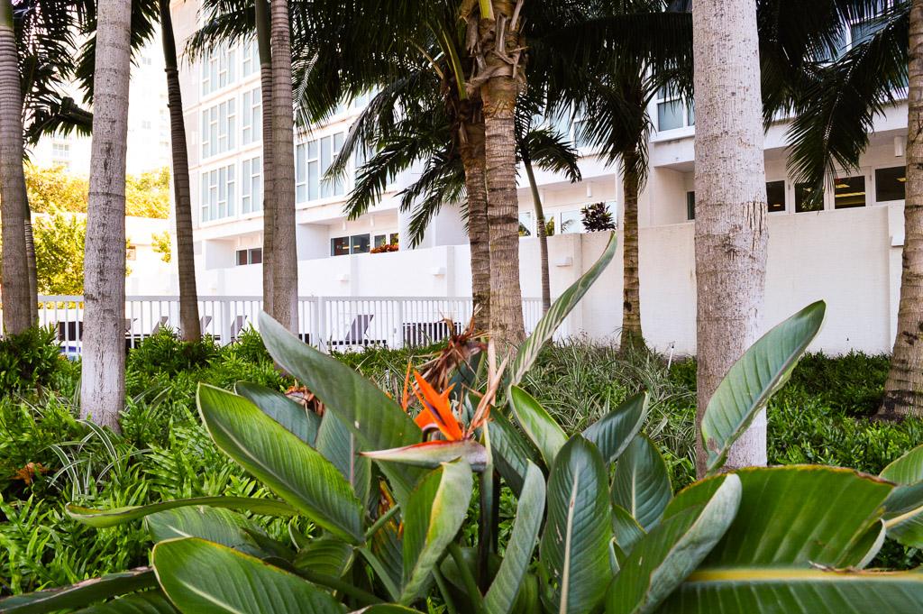 Miami photogallery 5