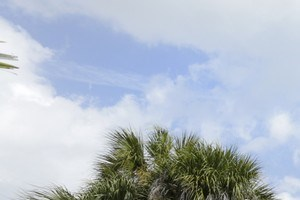 Daytona Beach photogallery 1