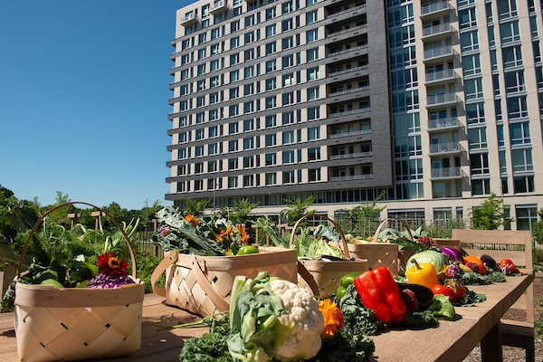 Urbanfarm at The Pearl, Silver Spring, MD, 20910