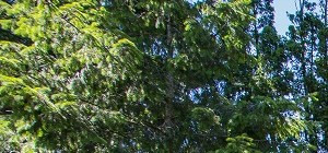 Beaverton background 3