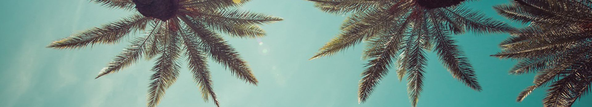 Palm Unfurnished Banner(1)