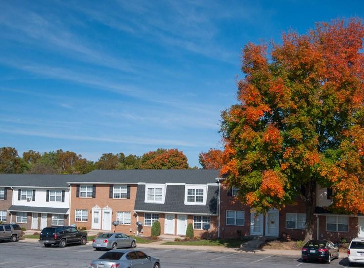 Fall Foliage at Falcon Crest