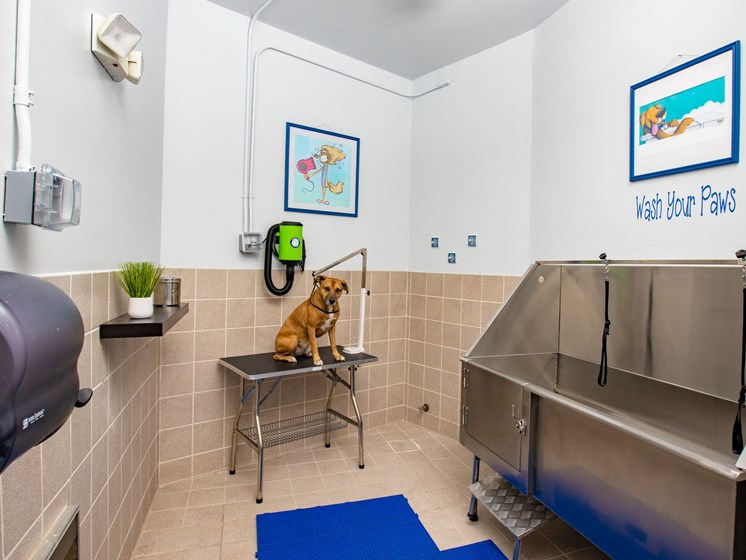 Dog Wash room with dog sitting underneath hair dryer. Large dog wash tub located inside.