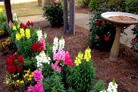 colorful spring flowers and birdbath near the office