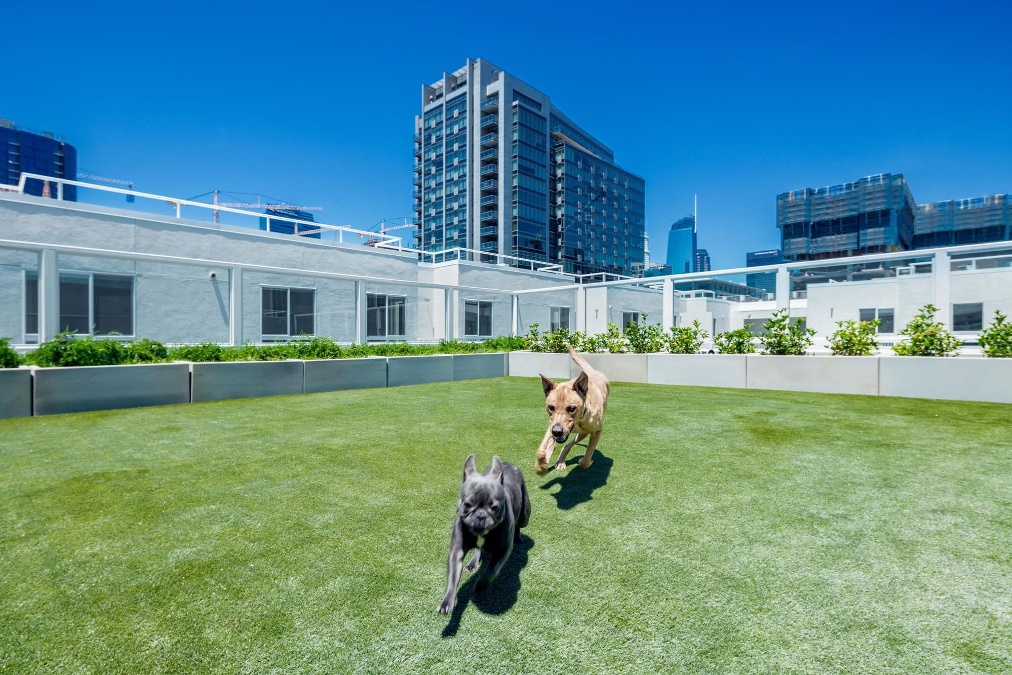 G12 Apartments_Los Angeles CA_Community Rooftop Dog Park