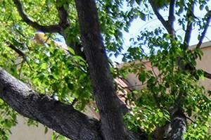 Building Facade at Canyon Villa Apartments, California, 91910