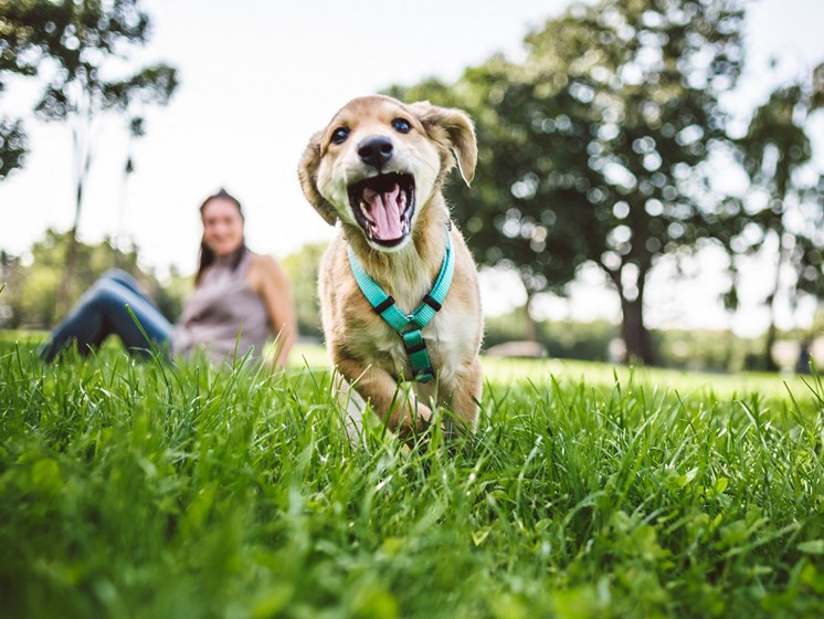 Pet Friendly at The Townes At Holly Station, MD 20601