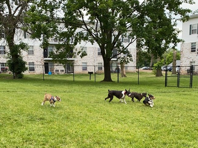 Apartments in Fitchburg, Wisconsin dogs