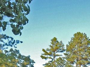 Little Rock Photo Gallery 31