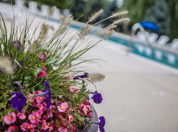 Flowerpot by Pool at Prentiss Pointe Apartments, MI
