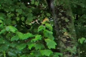 Greensboro photogallery 18