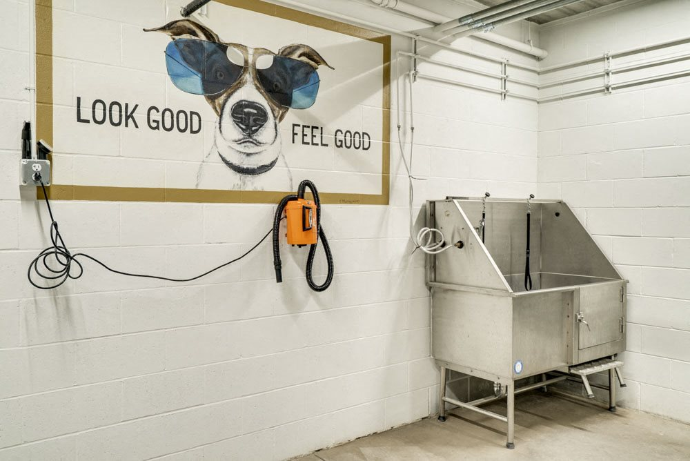 Pet wash station with hair dryer at The Conrad near UNMC in the Blackstone District Omaha NE 68105