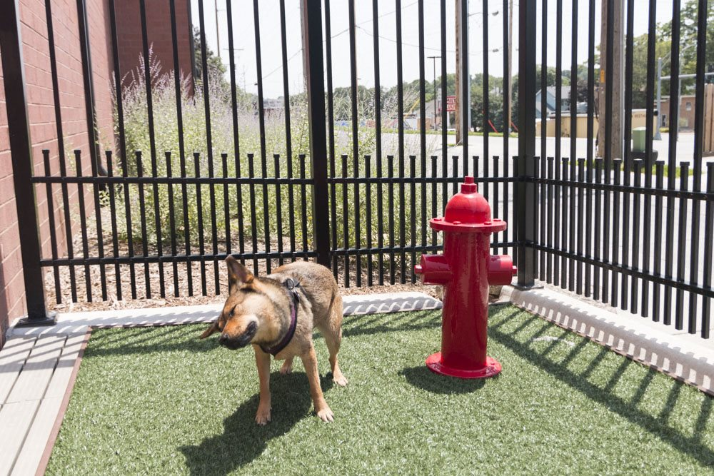 Pet-friendly apartments near UNMC at The Conrad in Blackstone District Omaha NE 68105