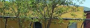 Missoula homepagegallery 2