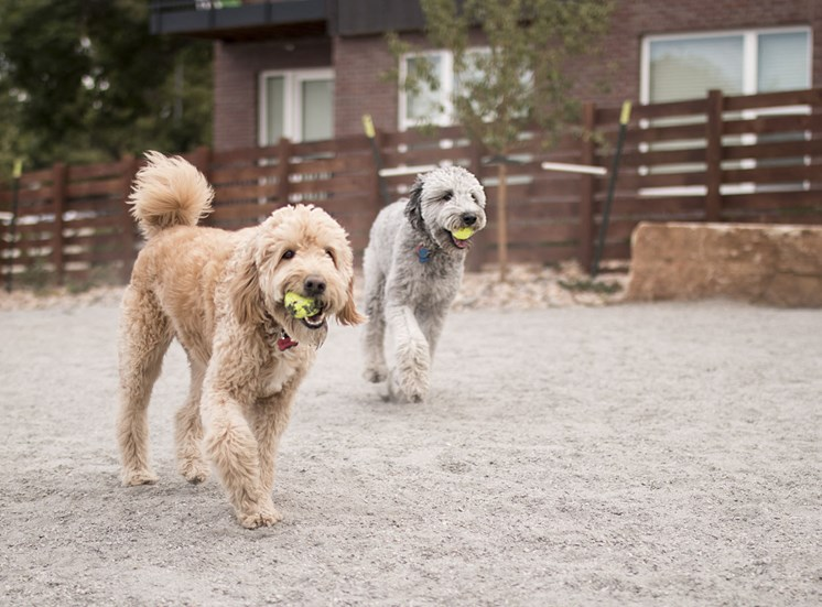On Site Bark Park and Pet Spa at Cycle Apartments, Ft. Collins, CO 80525