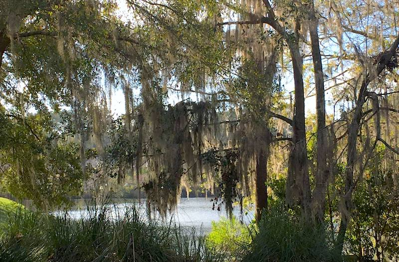 Cypress Pointe Apartment Homes Tallahassee, FL 32309 graceful spanish moss