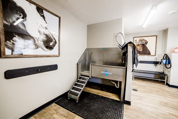 Dog Wash Stations- Northlake Village Apartments for Rent