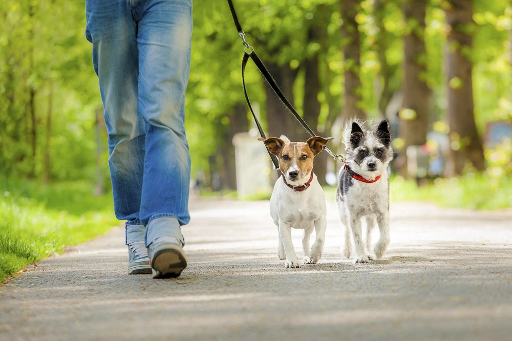 Direct access to the city trails where residents can walk their dogs at The villas at Mahoney Park
