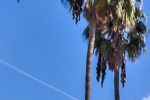 Los Angeles photogallery 12