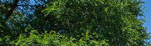 Tyler banner 1