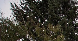 Treeline604_Vancouver_WA_Pool